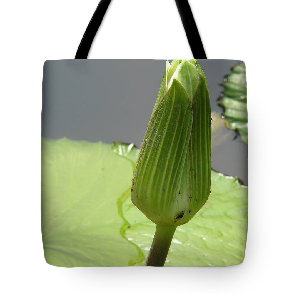 Lilly Tote Bag featuring the photograph Ready To Bloom by Amanda Barcon