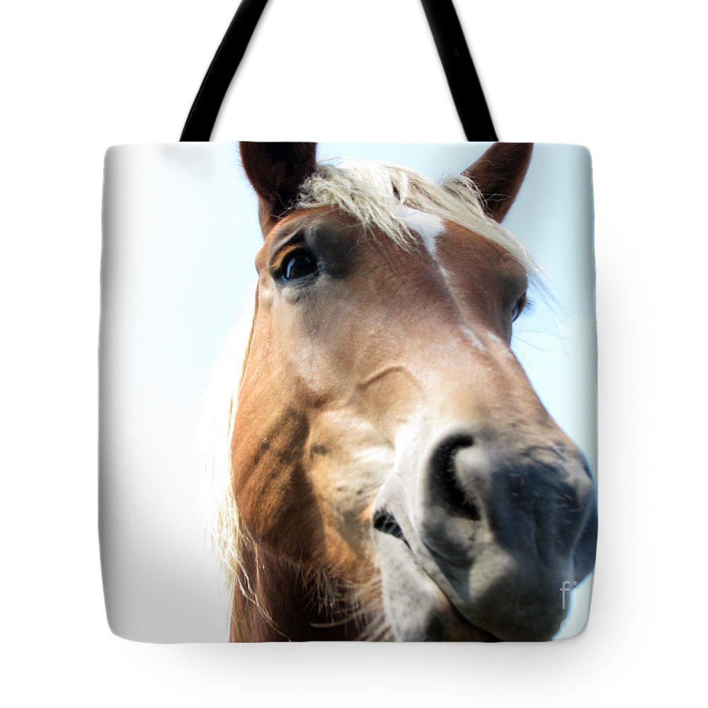 Horse Tote Bag featuring the photograph Really by Amanda Barcon