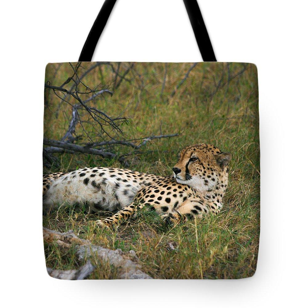 Karen Zuk Rosenblatt Art And Photography Tote Bag featuring the photograph Reclining Cheetah 2 by Karen Zuk Rosenblatt