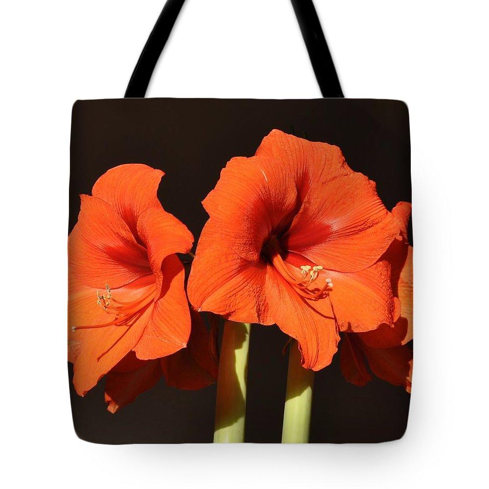 Amaryllis Flower Tote Bag featuring the photograph Red Amaryllis by Georgeta Blanaru