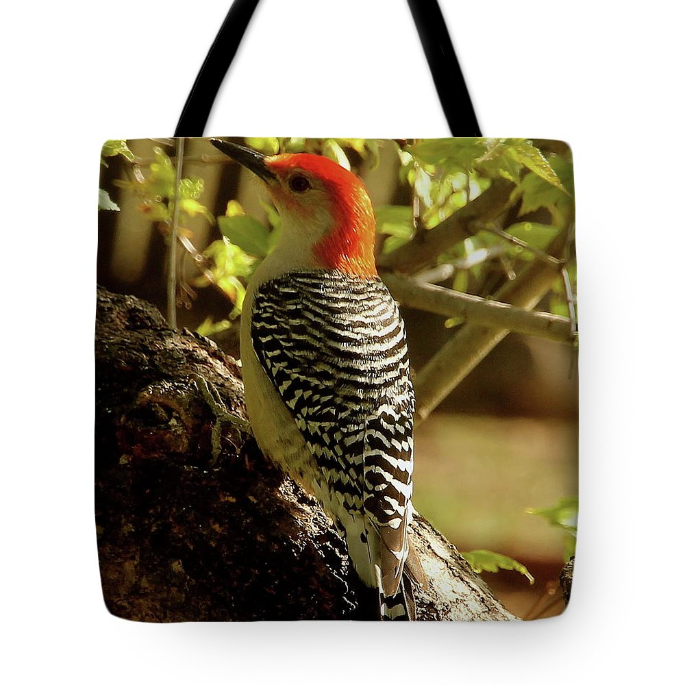 Bird Tote Bag featuring the photograph Red Bellied Woodpecker by Angie Sabo