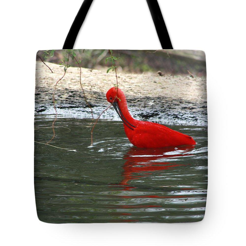 Sylvan Heights Bird Sanctuary 4 2015 Tote Bag featuring the photograph Red Bird by Teresa Doran