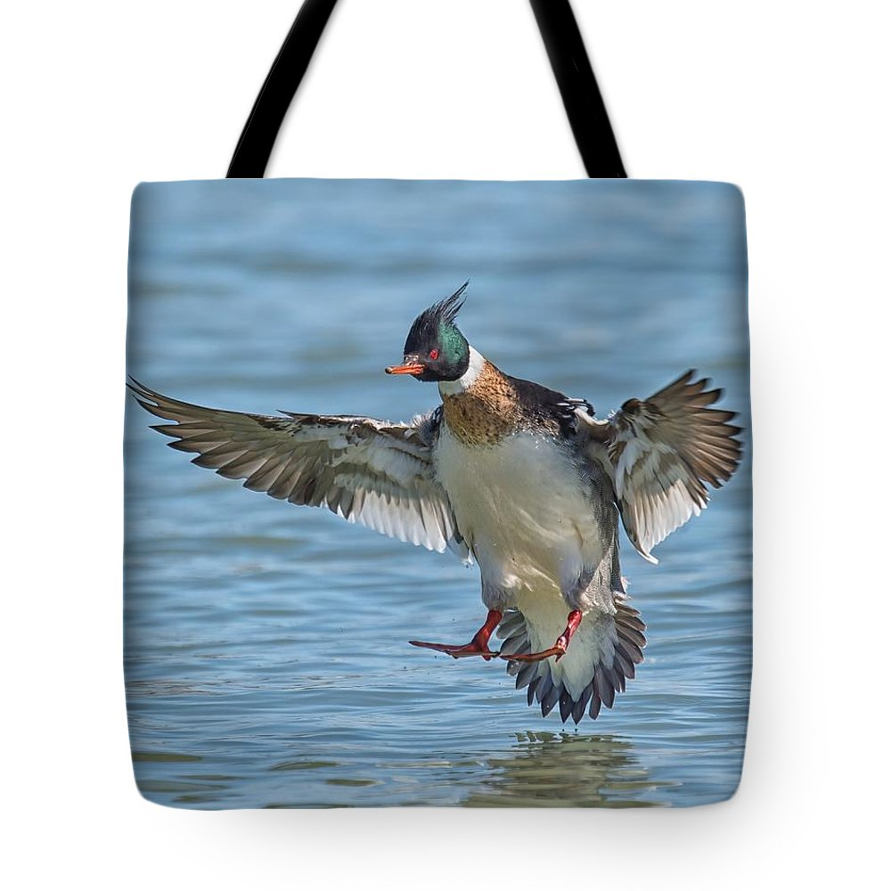 Duck Tote Bag featuring the photograph Red-breasted Merganser Landing by CR Courson