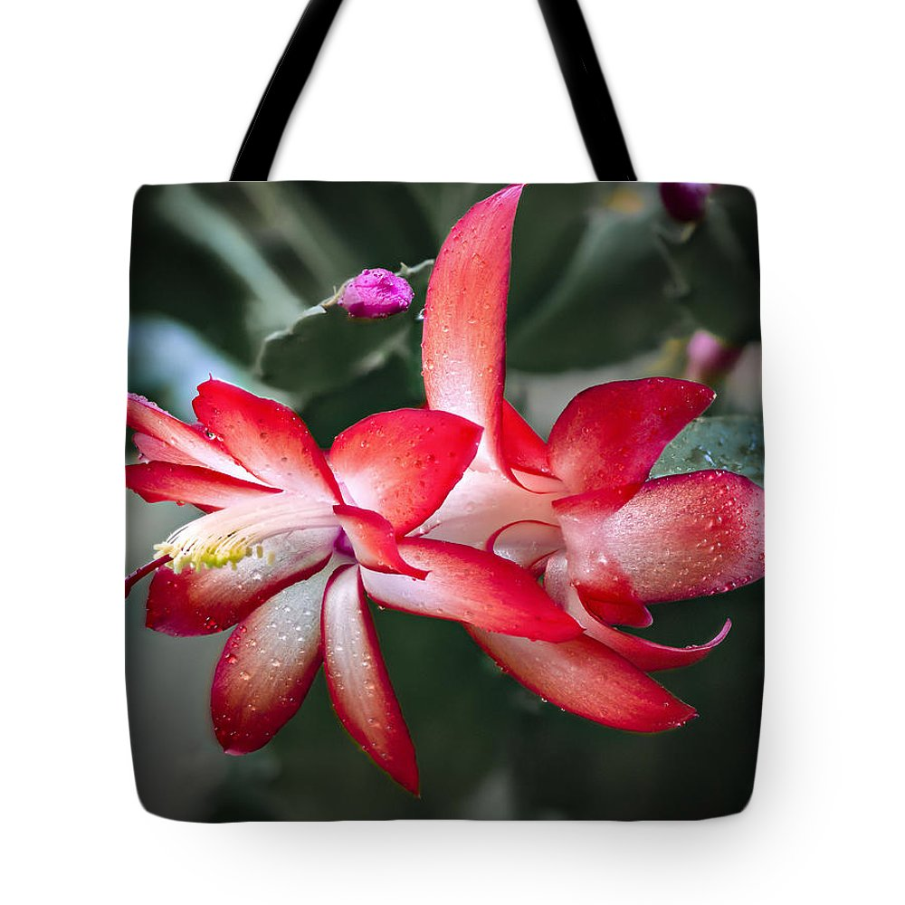 Jean Noren Tote Bag featuring the photograph Red Christmas Cactus by Jean Noren