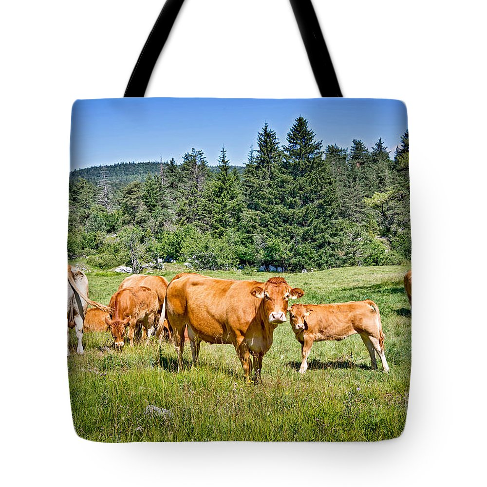 Cow Tote Bag featuring the photograph Red Cows by Delphimages Photo Creations