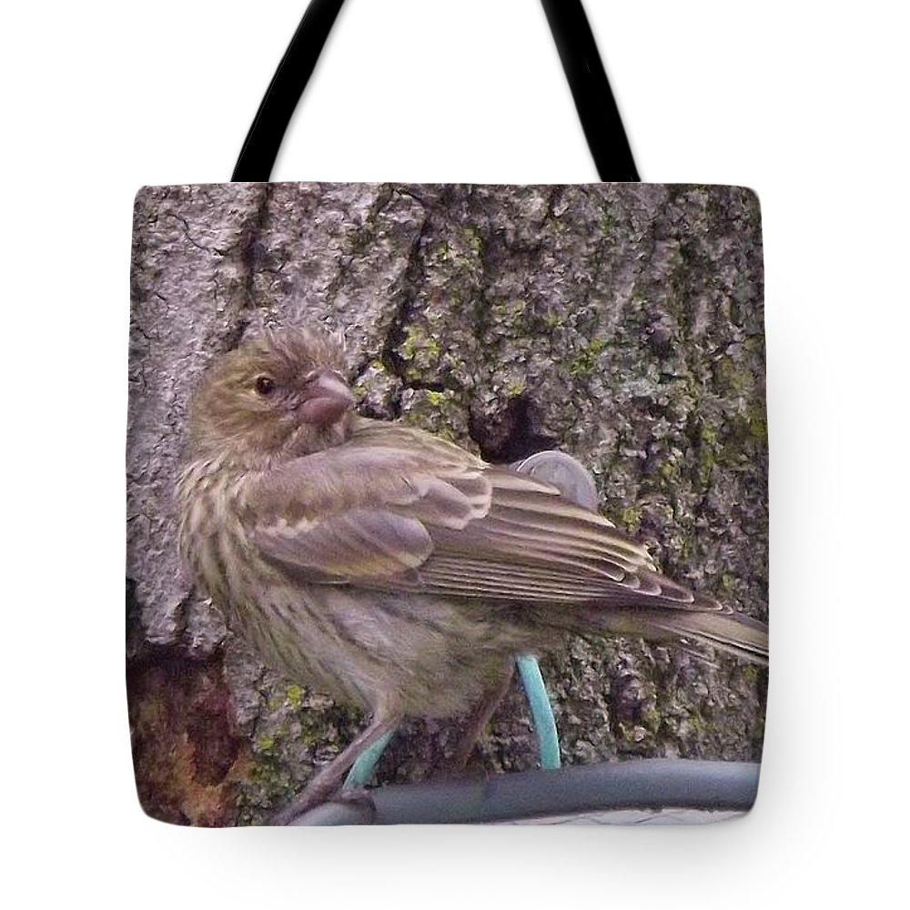Red Crossbill Female Tote Bag featuring the photograph Red Crossbill Female Indiana Summer by Rory Cubel