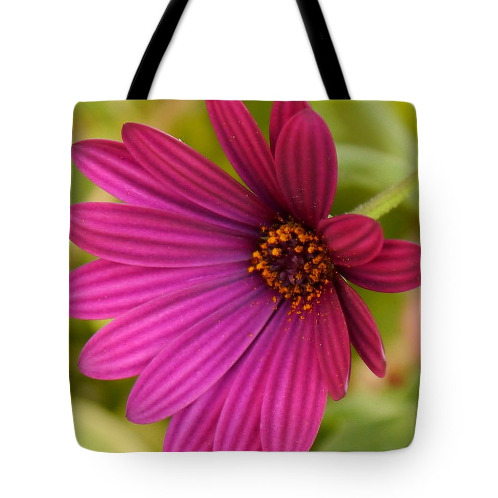 Daisy Tote Bag featuring the photograph Red Delight by Christiane Schulze Art And Photography