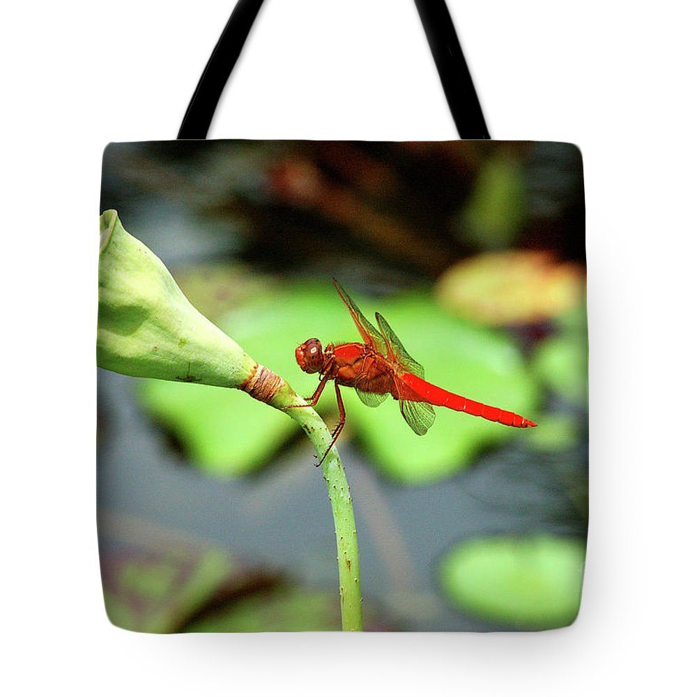 Dragon Flies Tote Bag featuring the photograph Red Dragon by Robert Anschutz