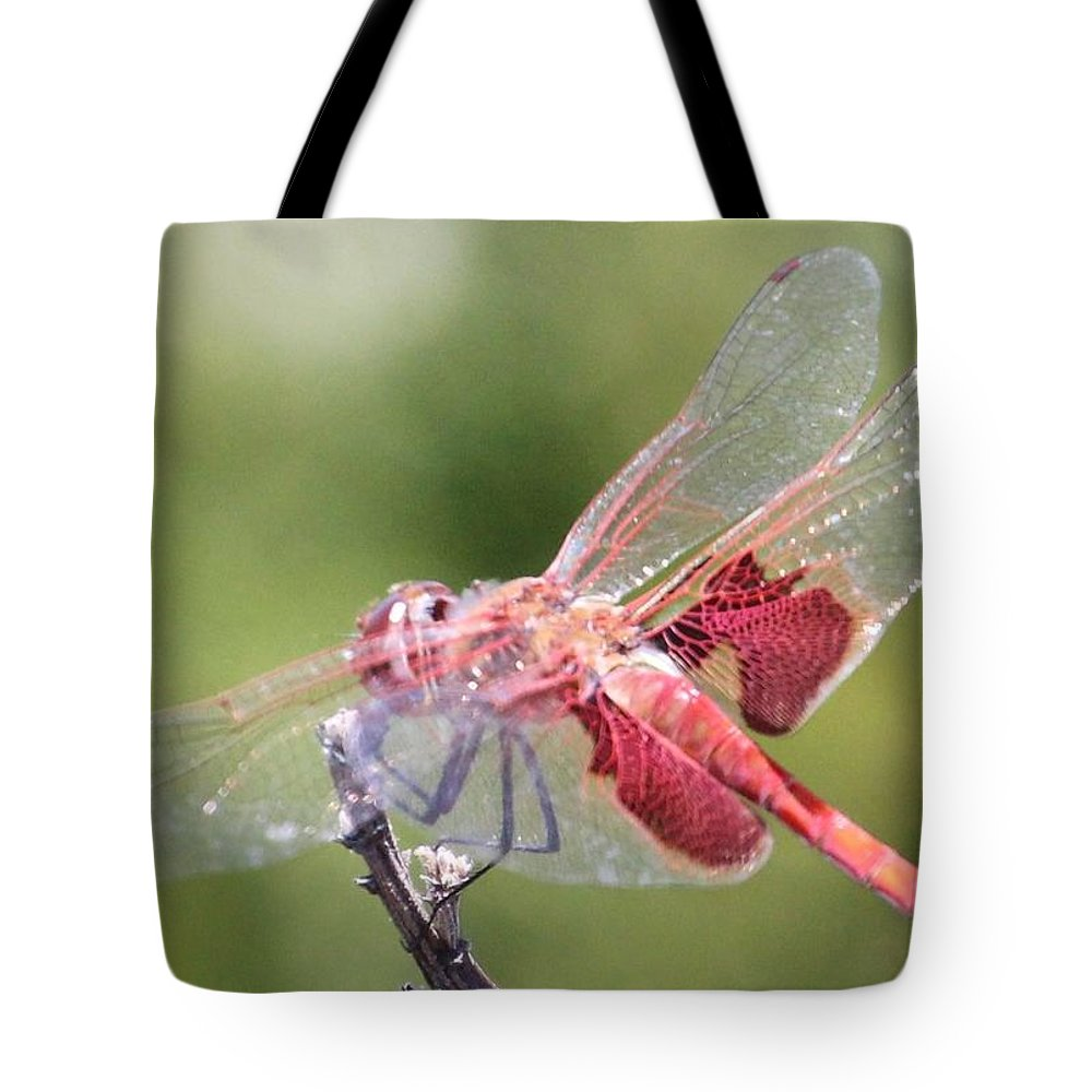 Dragonfly Tote Bag featuring the photograph Red Dragonfly 5 by Gary Canant