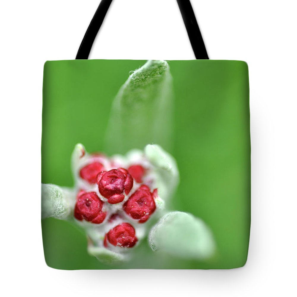 Red Everlasting Tote Bag featuring the photograph Red Everlasting At Amatzia Forest -1 by Dubi Roman