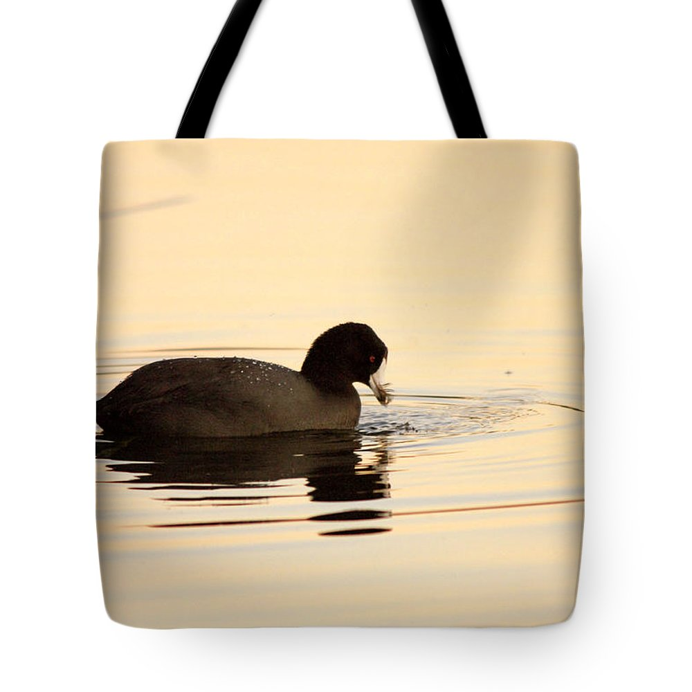 Bird Tote Bag featuring the photograph Red Eye Flight by Donna Blackhall