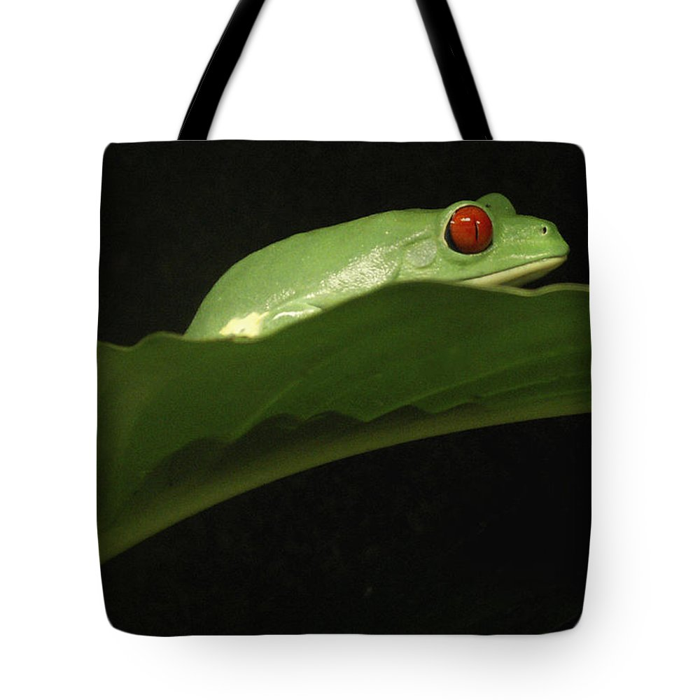 Frog Tote Bag featuring the photograph Red Eye Frog by Nancy Griswold