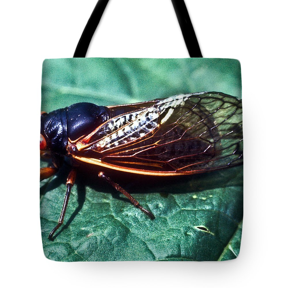 Homoptera Tote Bag featuring the photograph Red Eyed Cicada by Douglas Barnett