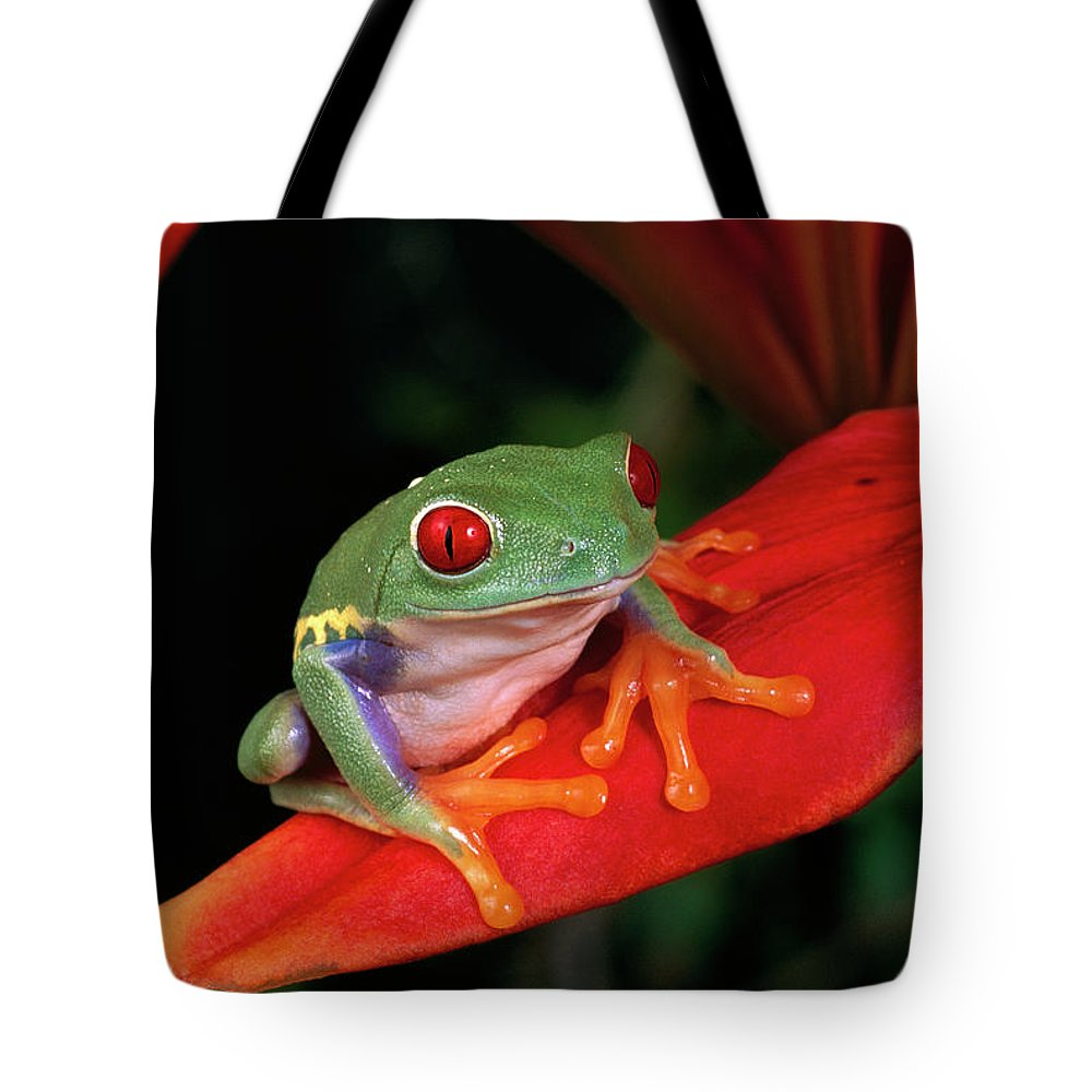 Mp Tote Bag featuring the photograph Red-eyed Tree Frog Agalychnis by Michael Durham