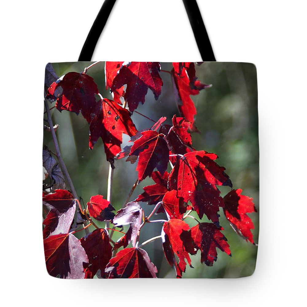 Red Leaves Tote Bag featuring the photograph Red Fall Leaves In The Sun by Christiane Schulze Art And Photography