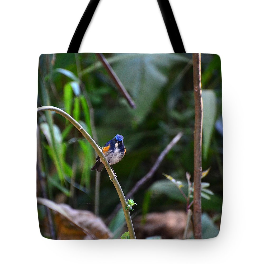 Red-flanked Tote Bag featuring the photograph Red-flanked Bluetail 2 by David Hohmann