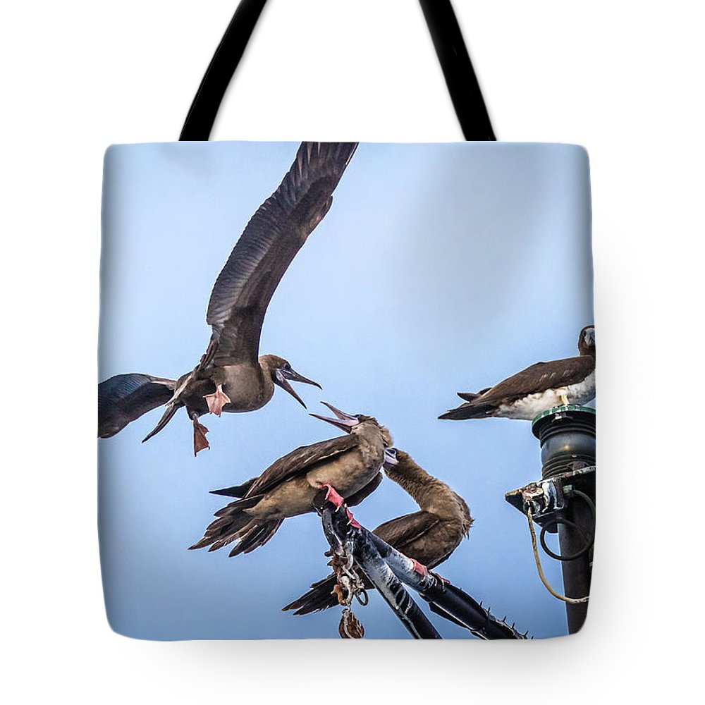 Screensaver Tote Bag featuring the photograph Red Footed Booby Argument 4 by Gregory Daley MPSA