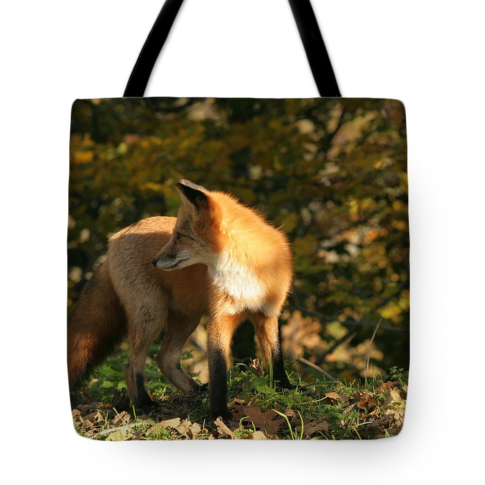 Red Fox Tote Bag featuring the photograph Red Fox In Shadows by Doris Potter