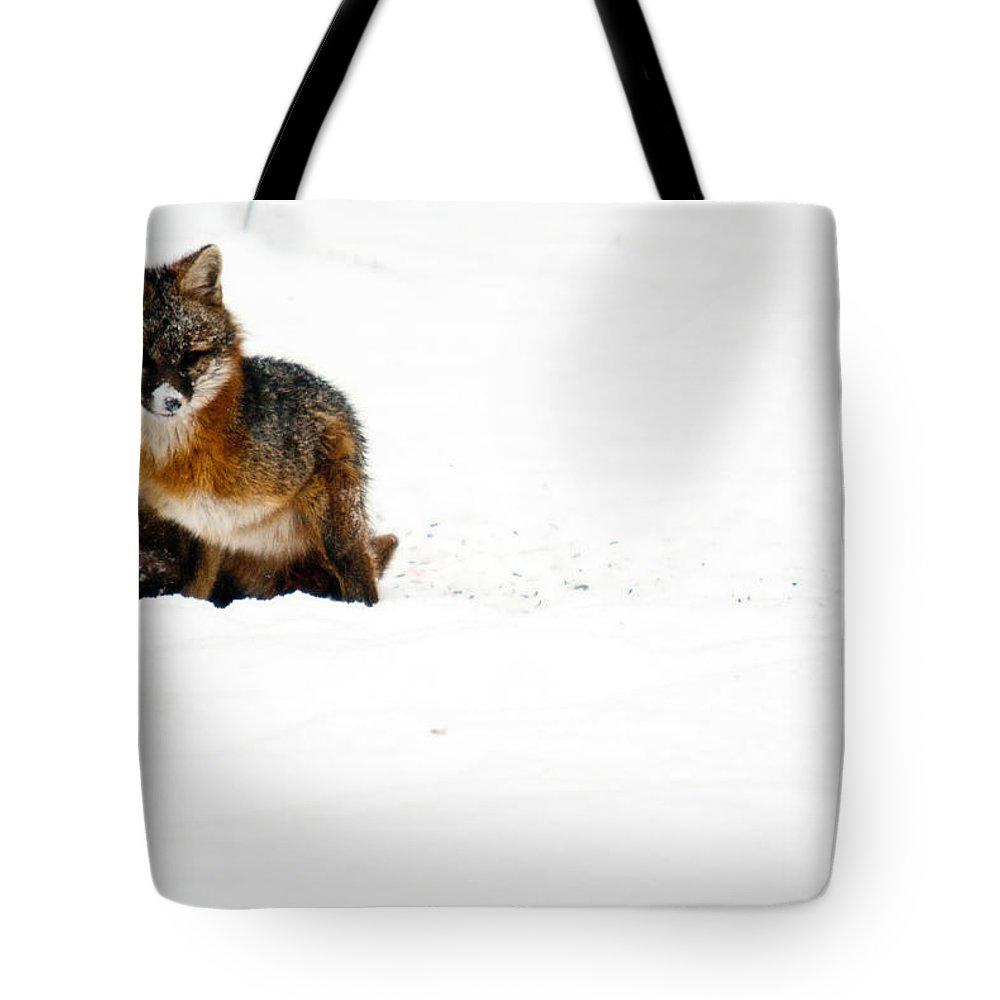 Fox Tote Bag featuring the photograph Red Fox In The Snow by Douglas Barnett