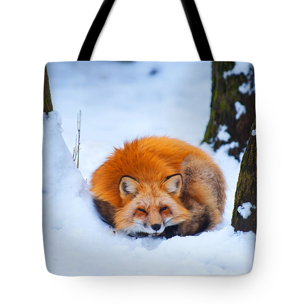 Red Fox Tote Bag featuring the photograph Red Fox by Laszlo Gyorsok