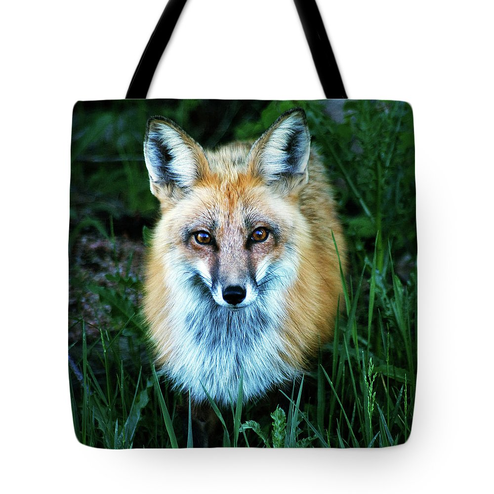 Fox Tote Bag featuring the photograph Red Fox by Mark Ivins