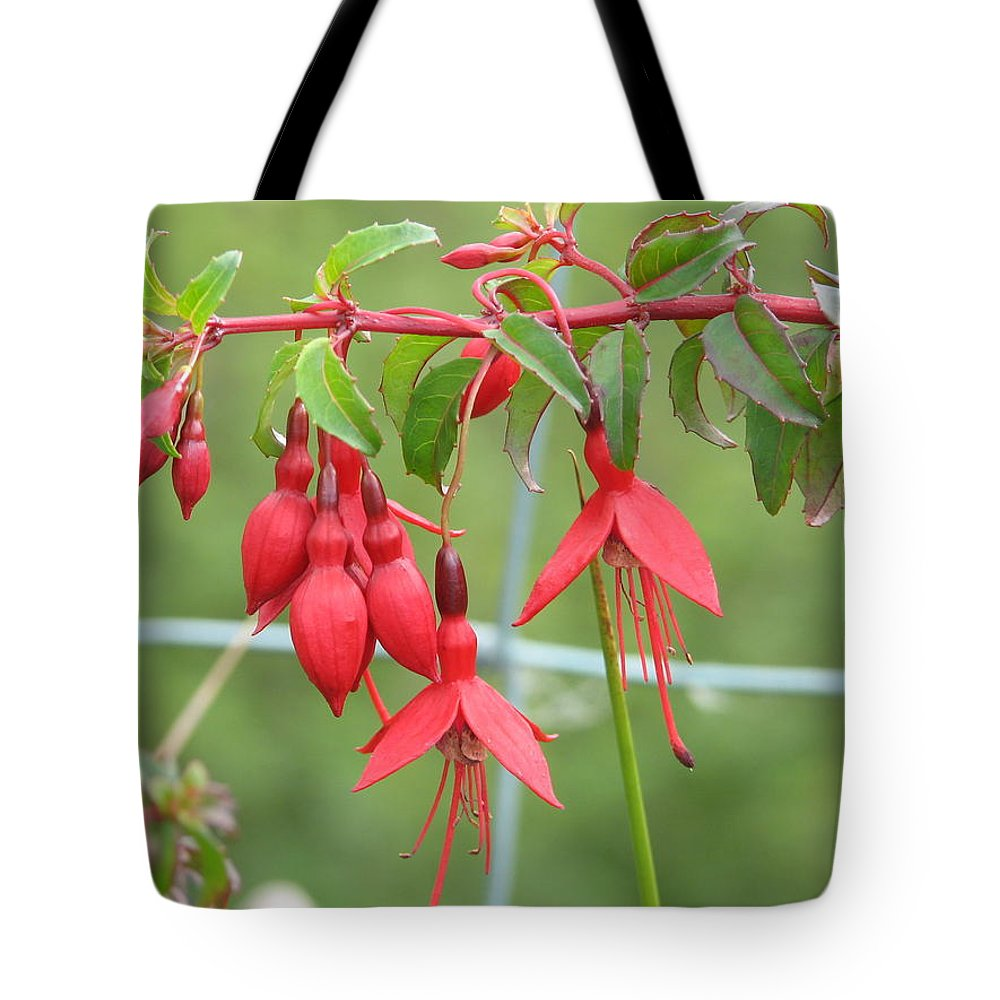 Fresia Tote Bag featuring the photograph Red Fresia by Kelly Mezzapelle