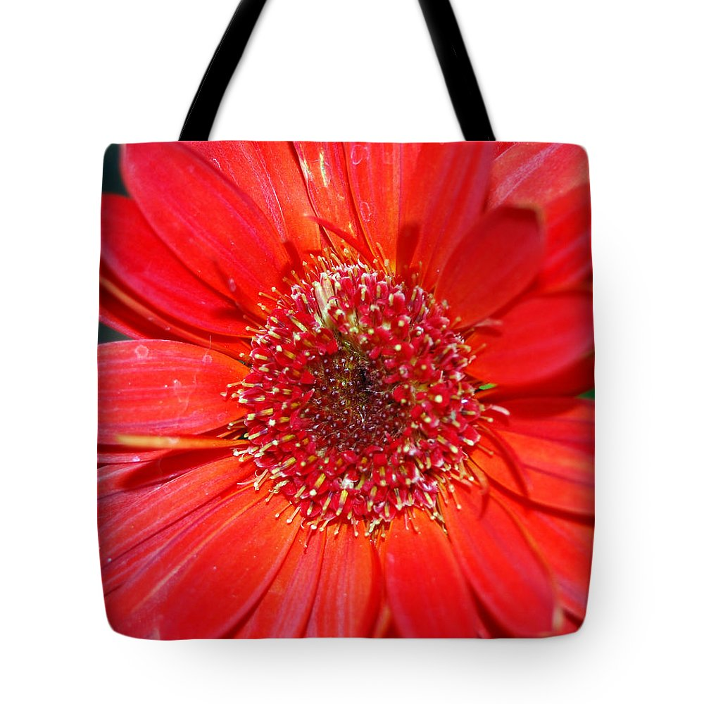 Gerber Tote Bag featuring the photograph Red Gerber Daisy by Amy Fose