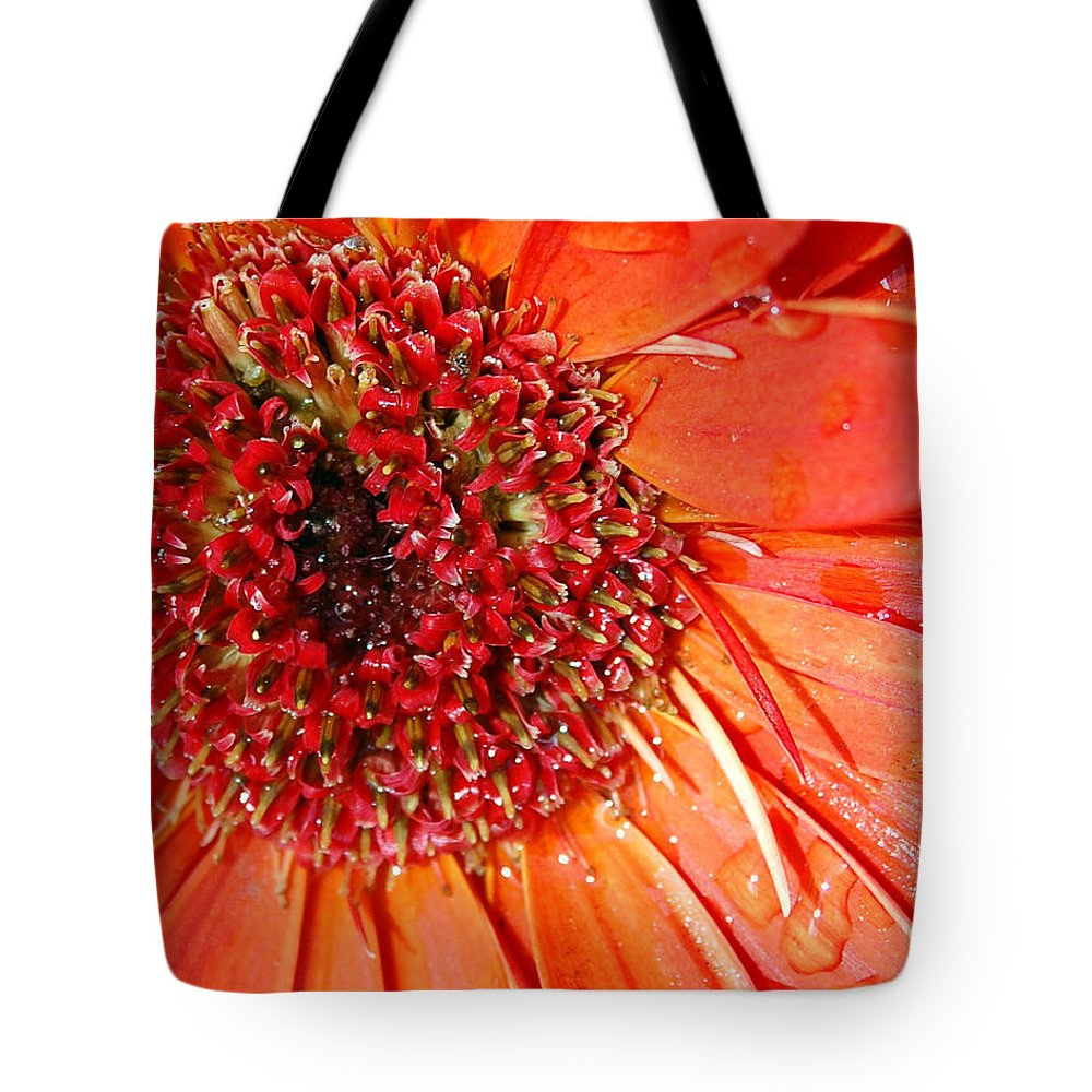 Gerber Daisy Tote Bag featuring the photograph Red Gerbera Daisy by Amy Fose
