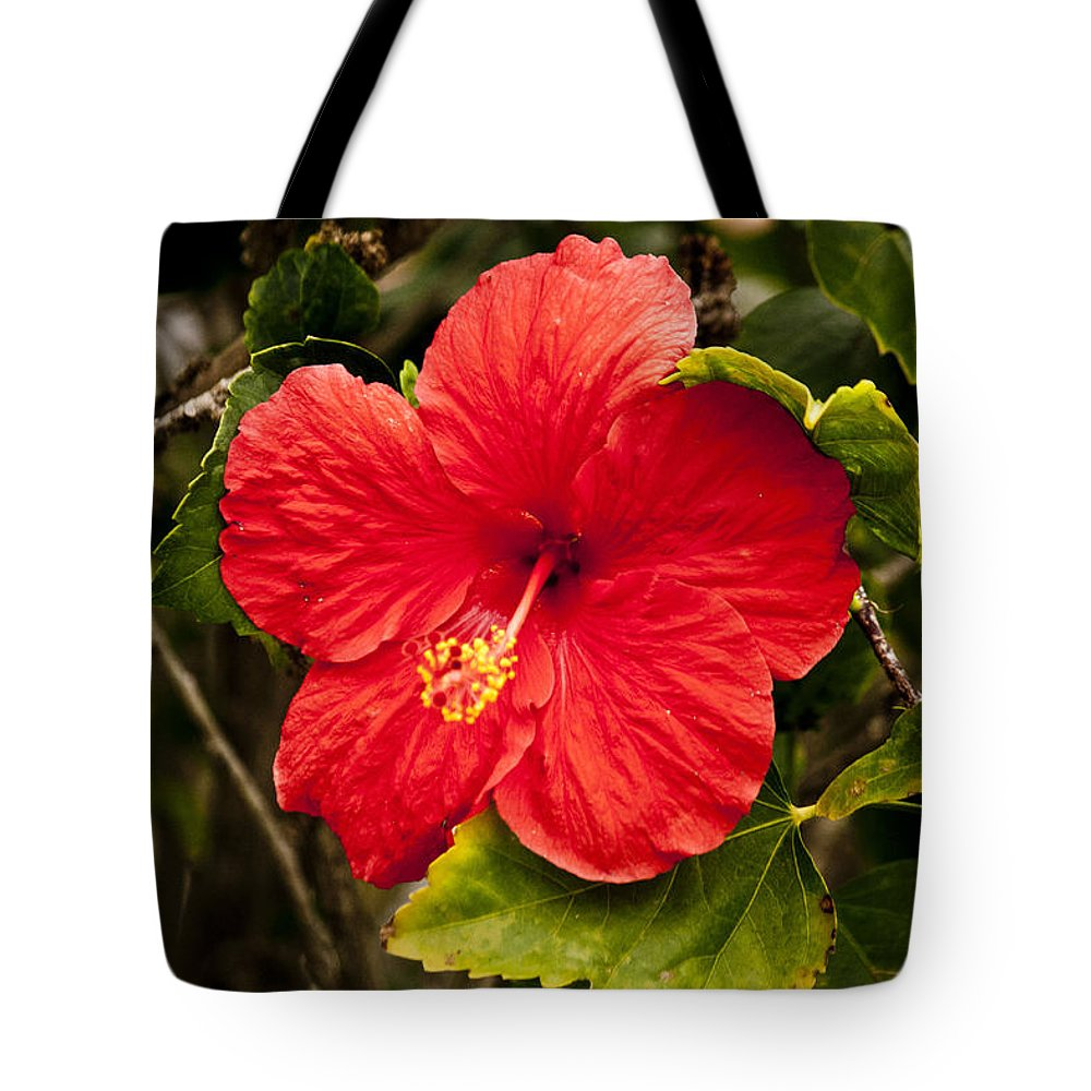 Flower Tote Bag featuring the photograph Red Hibiscus by Donna Walsh