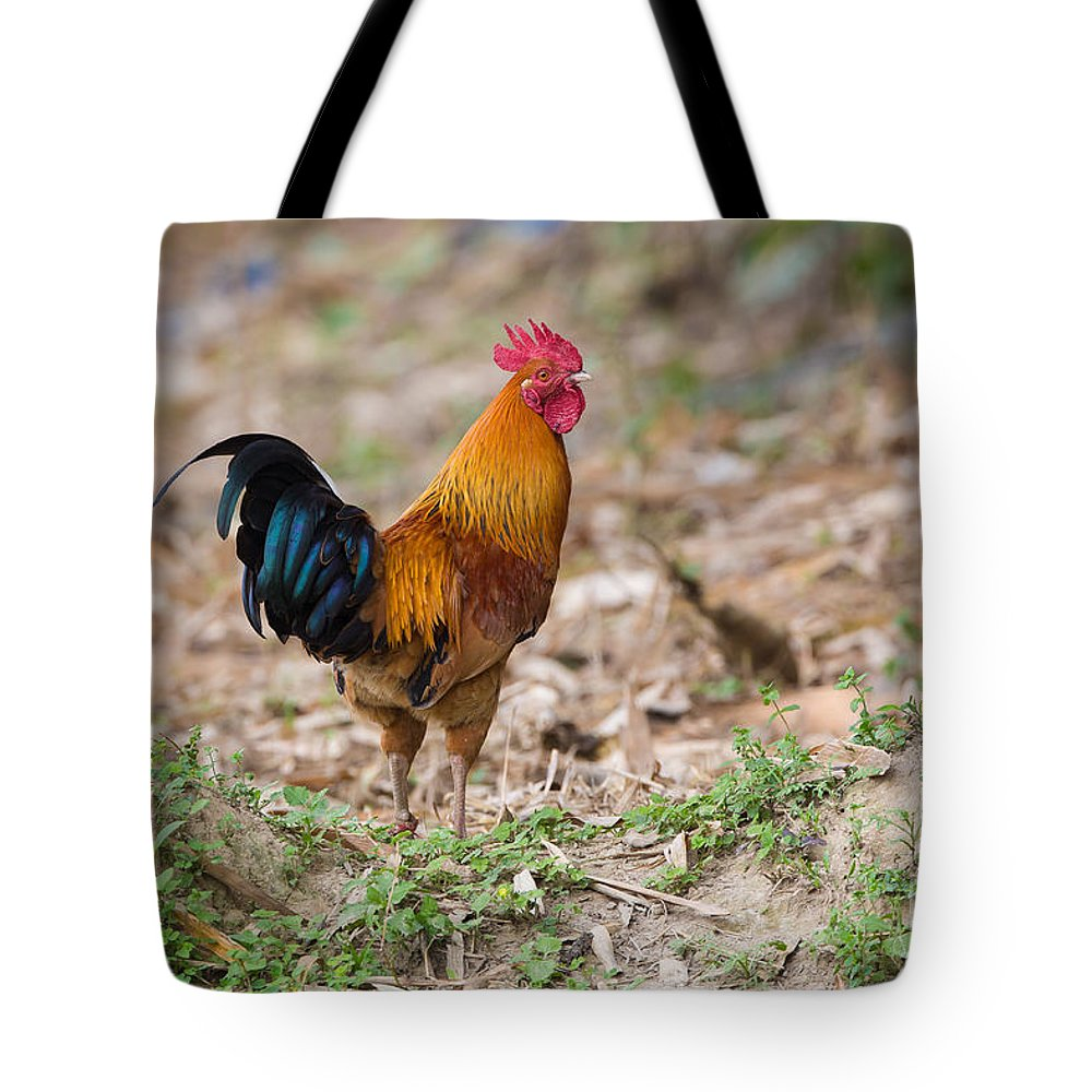 Red Jungle Fowl, India Tote Bag