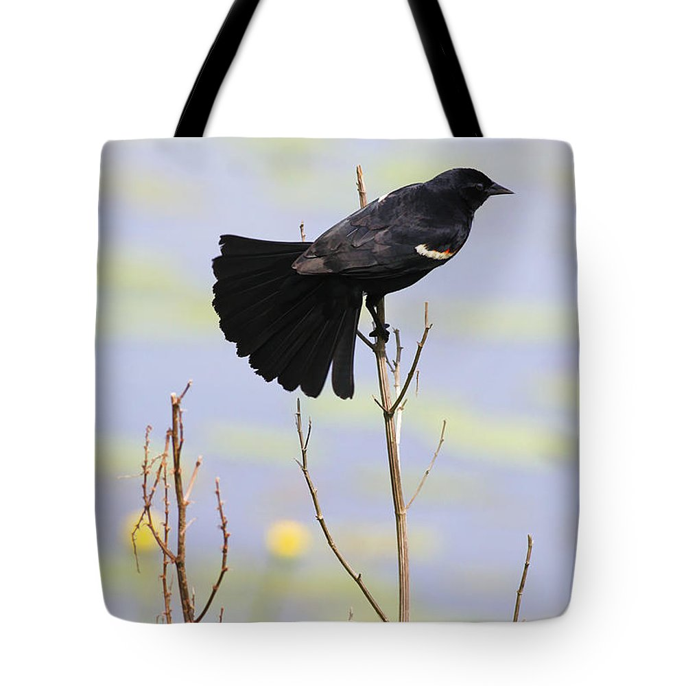 Bird Tote Bag featuring the photograph Red On Blue by Deborah Benoit