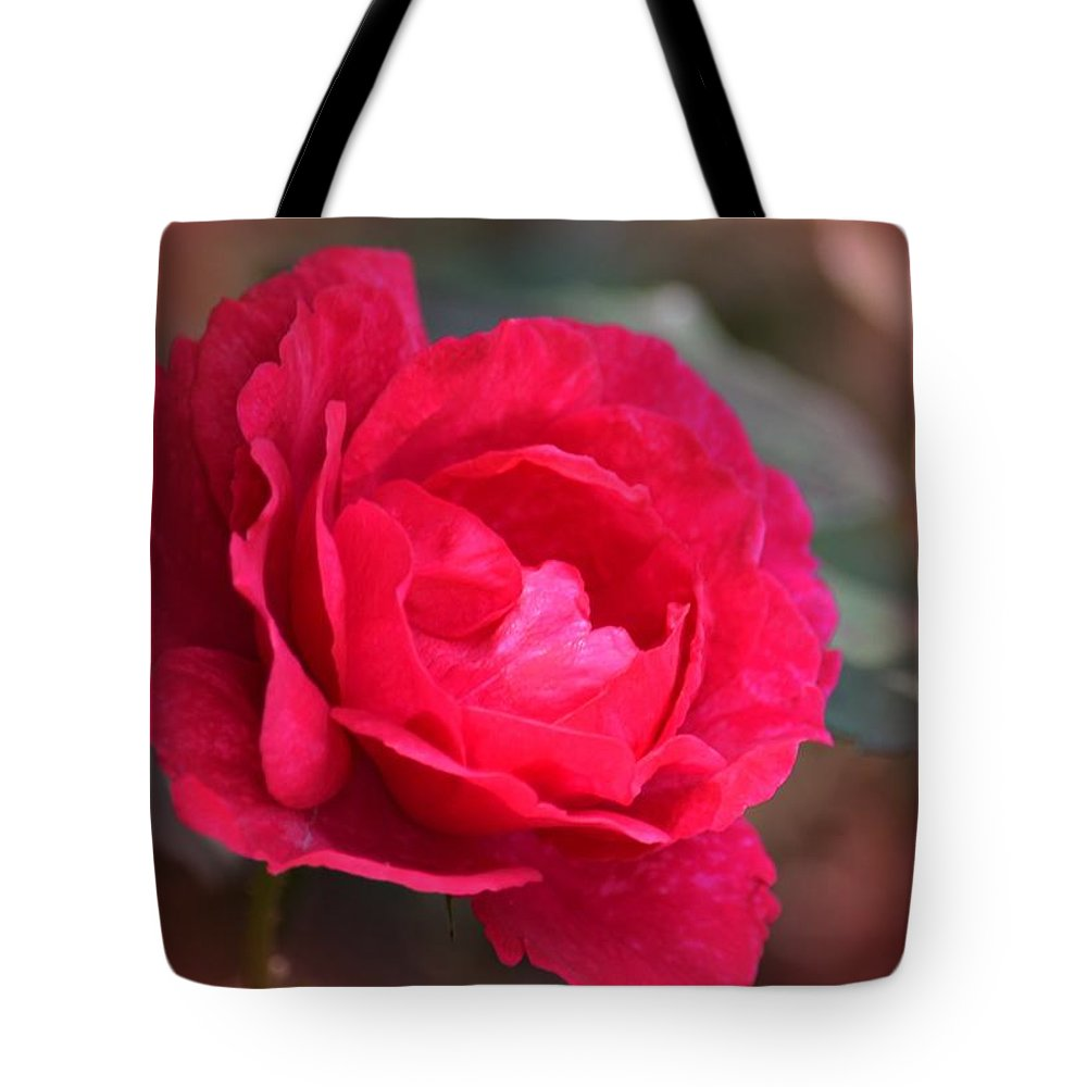 Red Rose Of May Tote Bag featuring the photograph Red Rose Of May by Maria Urso