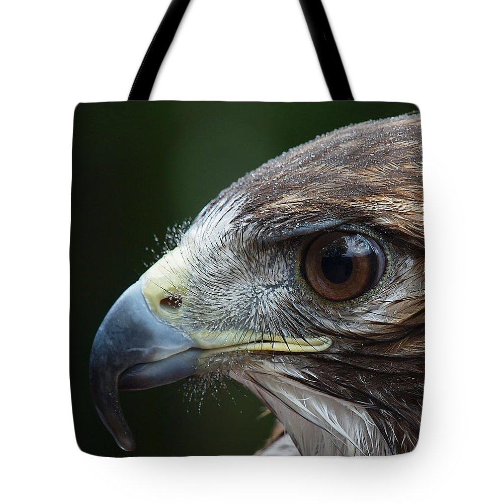 Red Tail Hawk Photo Tote Bag featuring the photograph Red Tail Hawk Misted by Peter Gray