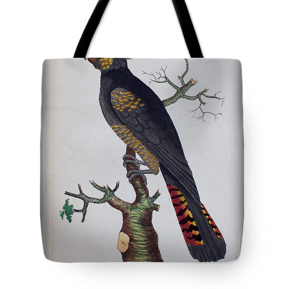 Red-tailed Tote Bag featuring the drawing Red-tailed Black Cockatoo 1790 by Nodder