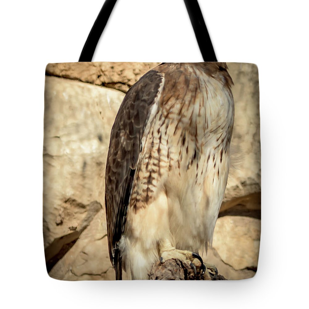 Red-tailed Hawk Tote Bag featuring the photograph Red-tailed Hawk 4 by David Pine