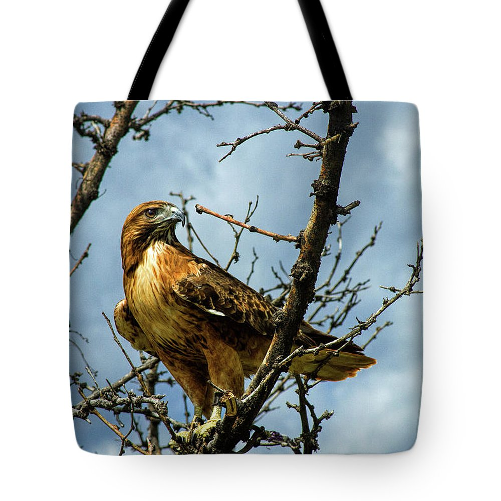 Hawk Tote Bag featuring the photograph Red-Tailed Hawk by Alana Thrower