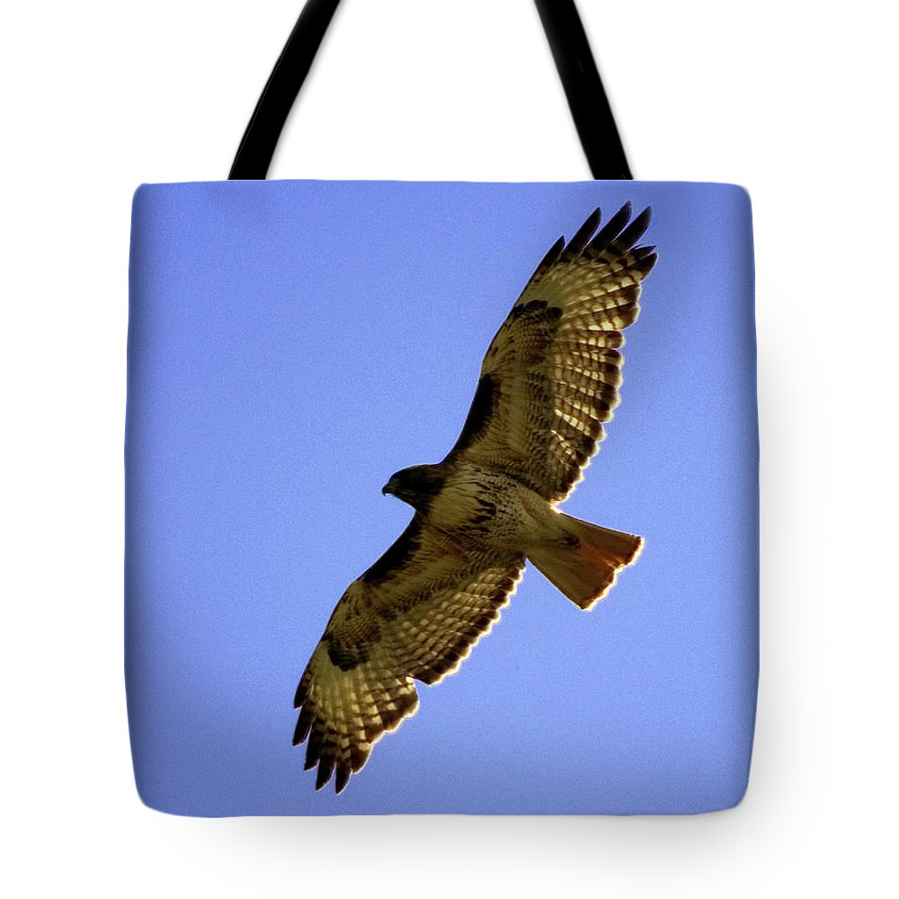 Red-tailed Hawk Tote Bag featuring the photograph Red-tailed Hawk by Mark Ivins