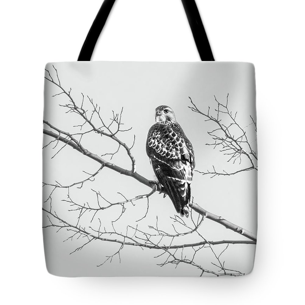 2017 Tote Bag featuring the photograph Red-tailed Hawk On Perch by Cary Leppert
