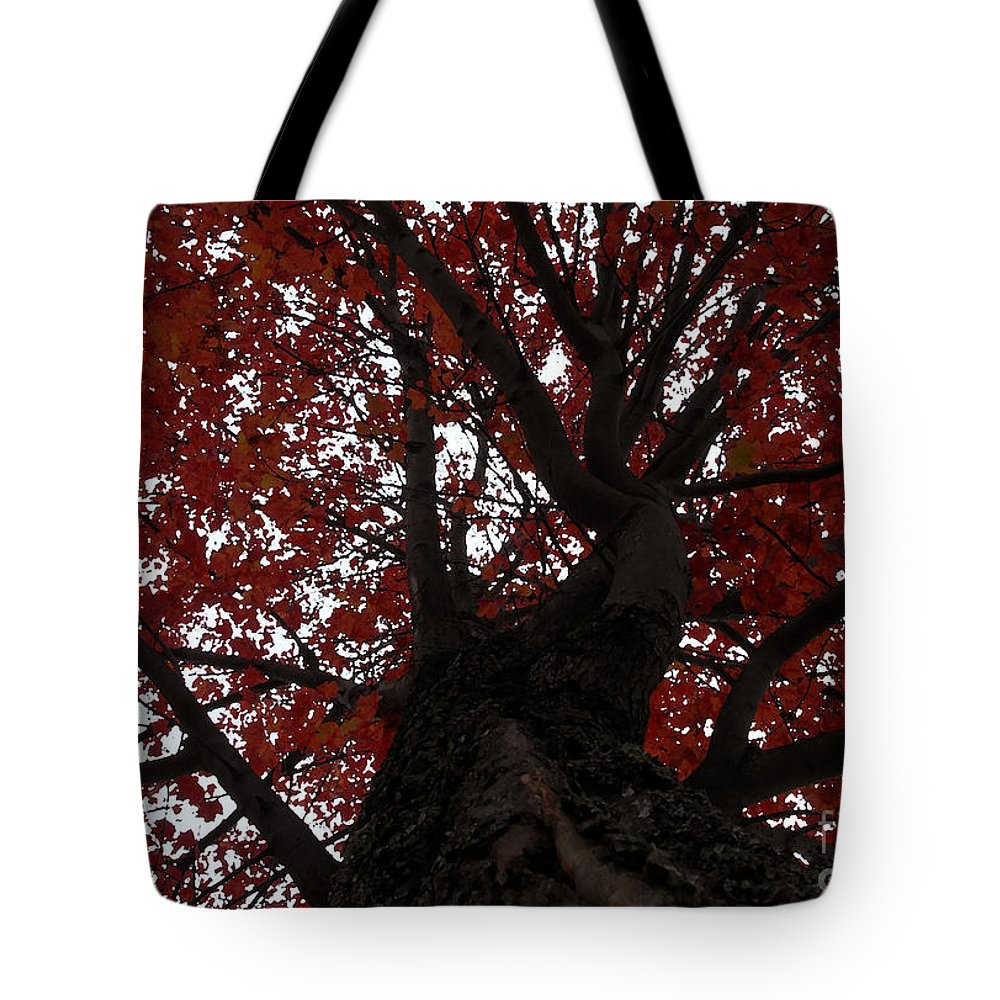 Fall Tote Bag featuring the photograph Red Tree by David Lee Thompson