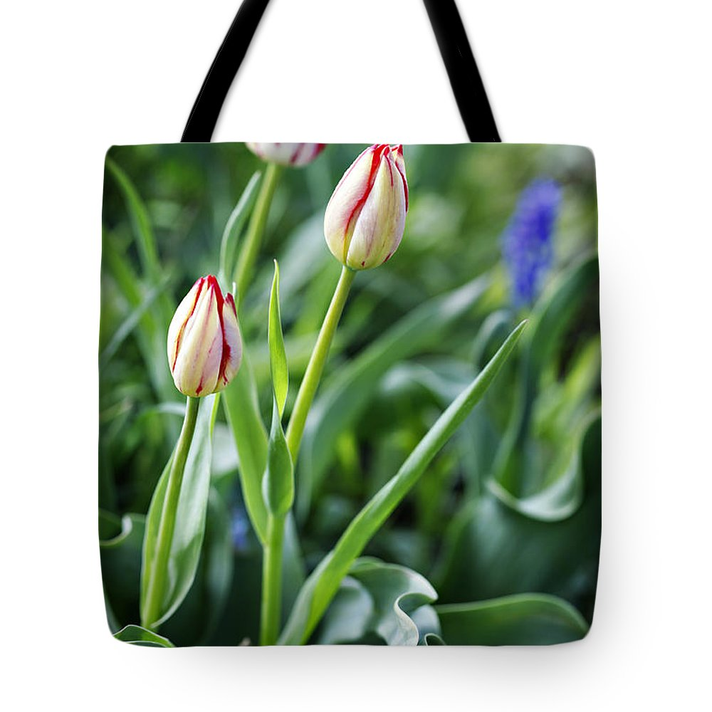 Flower Tote Bag featuring the photograph Red White Tulips by Marilyn Hunt