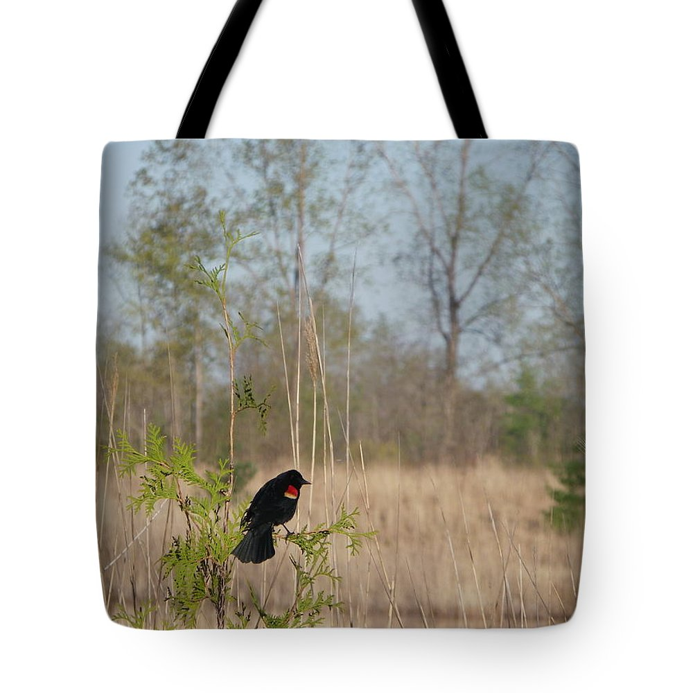 Nature Tote Bag featuring the photograph Red-winged Blackbird by Peggy King