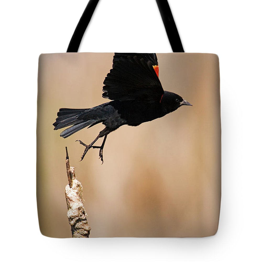 Red-winged Blackbird Tote Bag featuring the photograph Red-winged Takeoff by Randall Ingalls