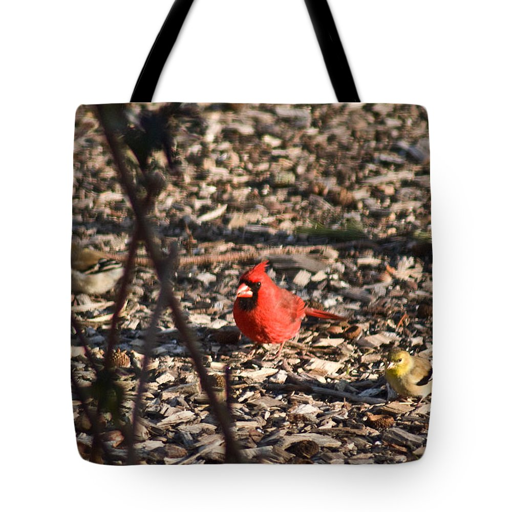 Redbird Tote Bag featuring the photograph Redbird And American Golden Finch by Douglas Barnett