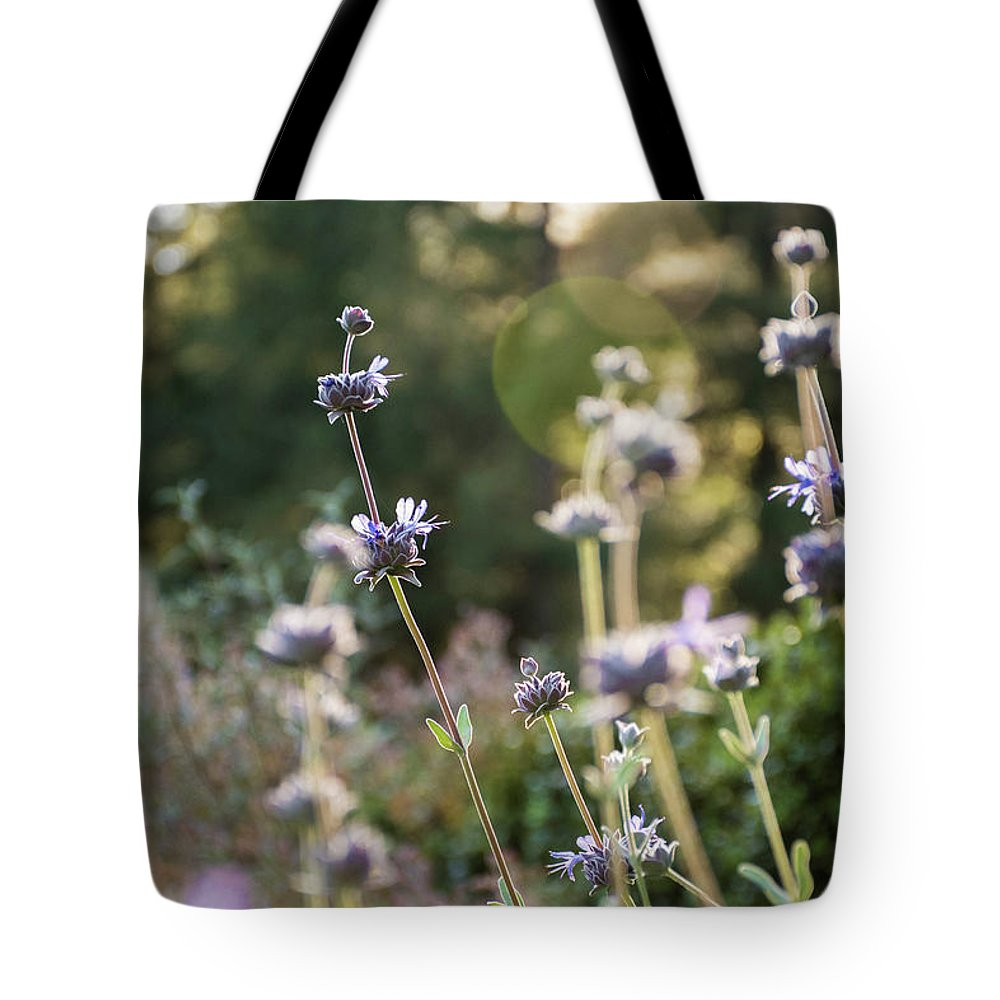 Lavender Tote Bag featuring the photograph Redwood Meadow Light 2 by Jessica Ruscello