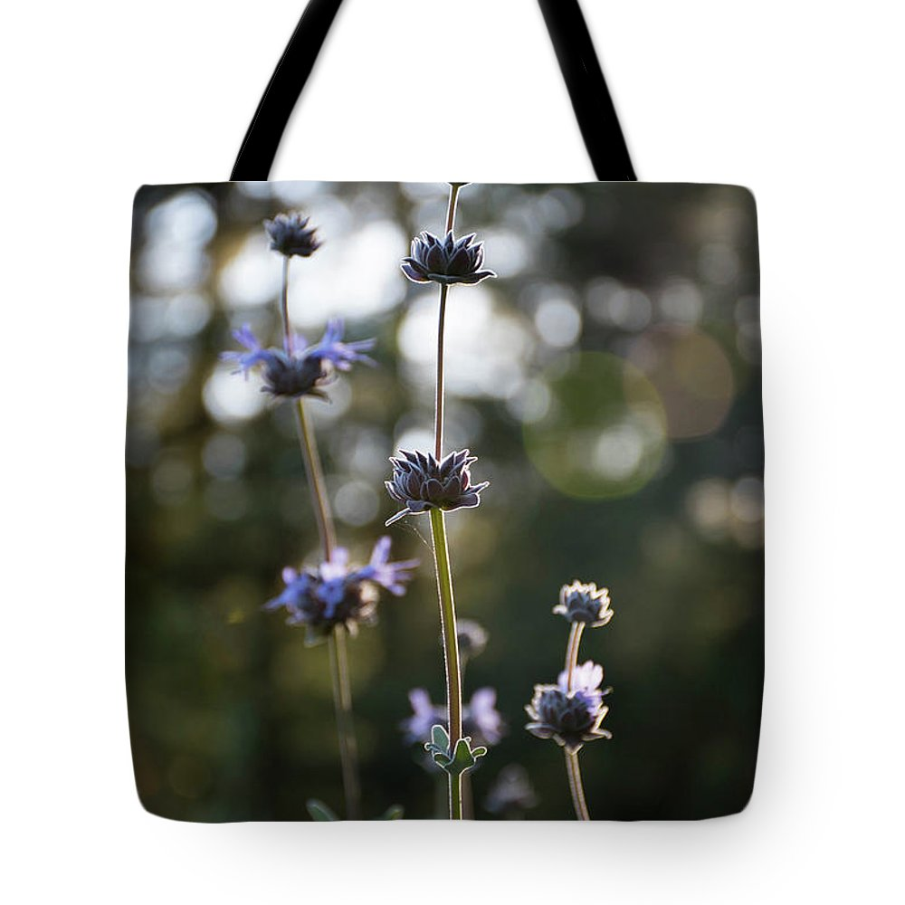 Redwoods Tote Bag featuring the photograph Redwood Meadow Light by Jessica Ruscello