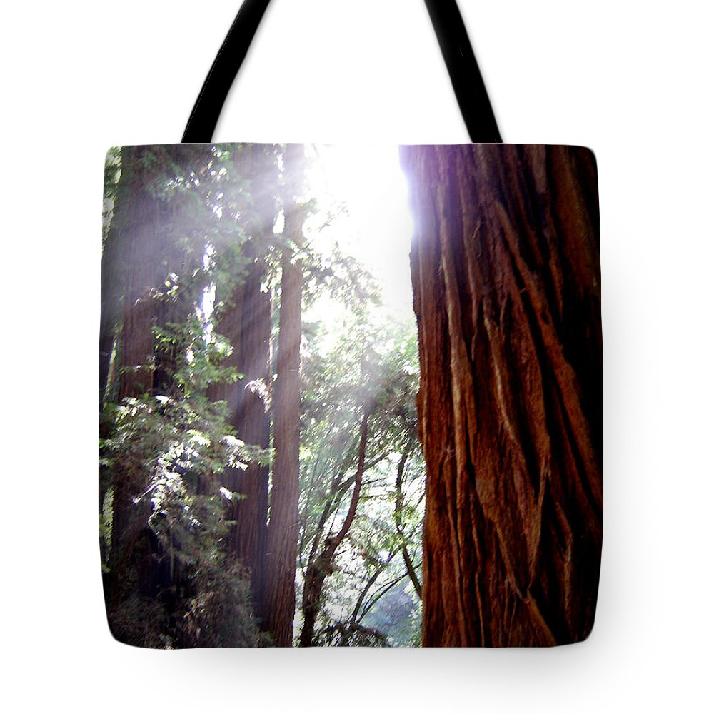 Redwoods Tote Bag featuring the photograph Redwood Sunlight by Mary Rogers