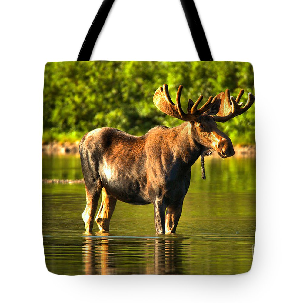 Moose Tote Bag featuring the photograph Reflecting In Fishercap by Adam Jewell
