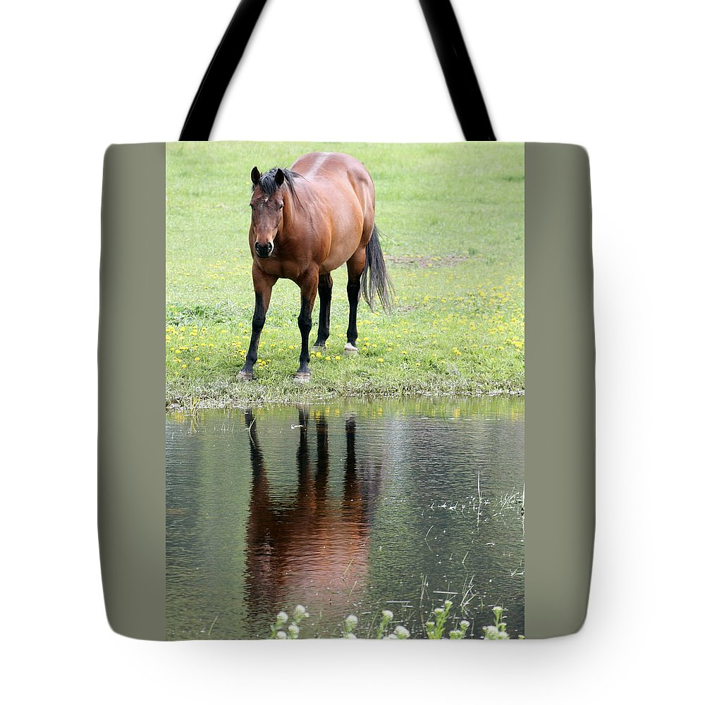 Horse Tote Bag featuring the photograph Reflecting Horse Near Water by Tiffany Vest