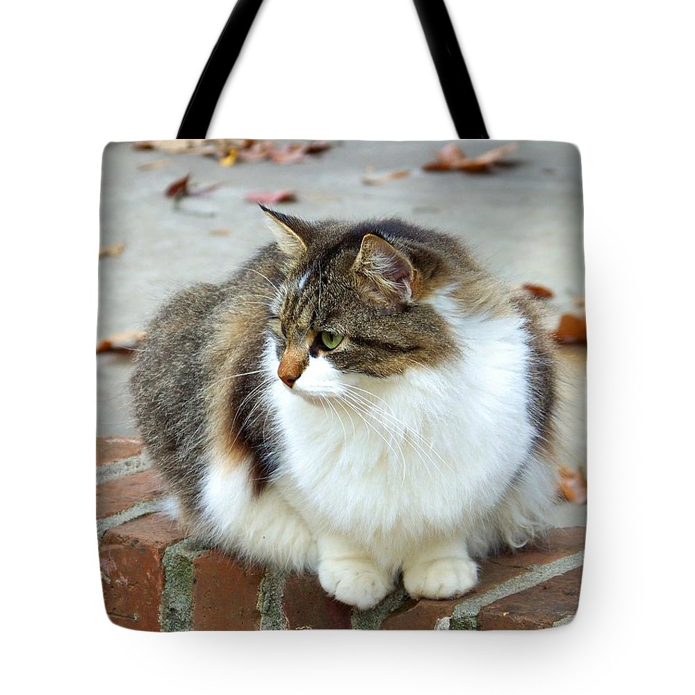 Cat Tote Bag featuring the photograph Reflection Of Autumn by Jai Johnson