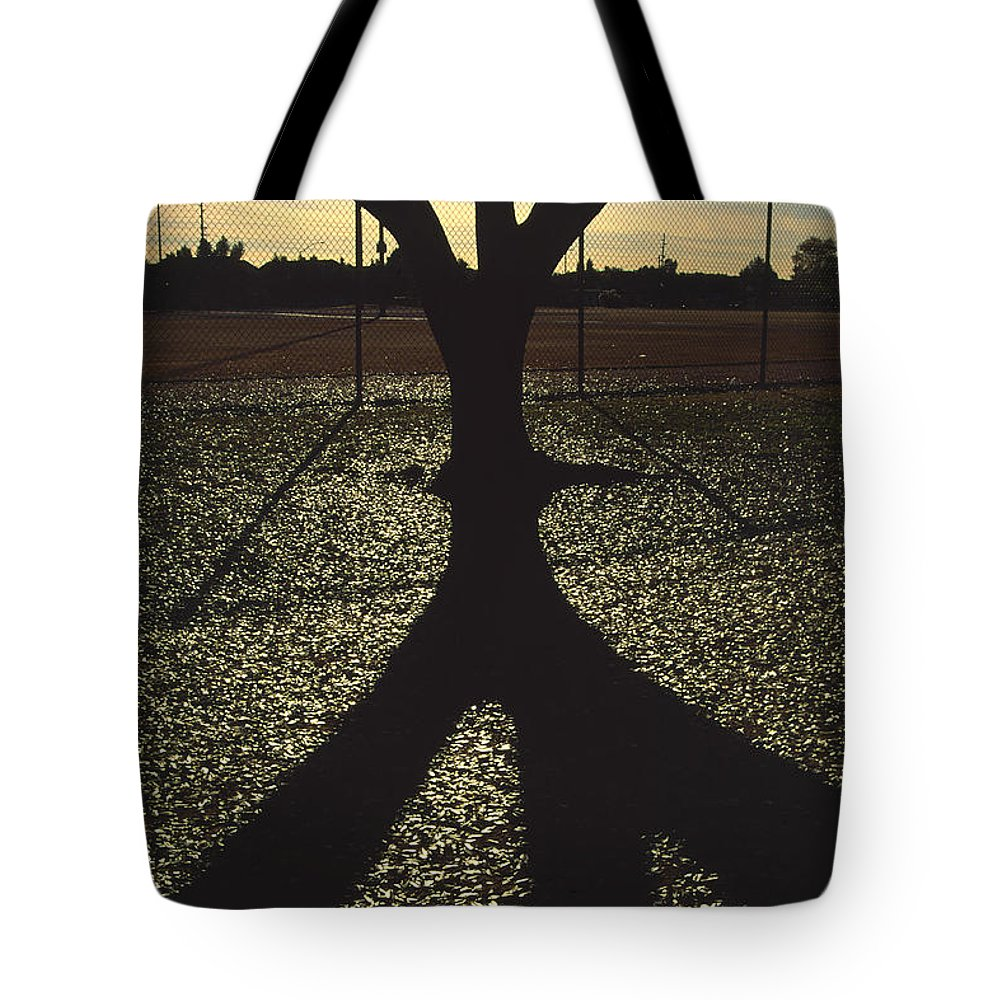 Tree Tote Bag featuring the photograph Reflections In A Park by Randy Oberg